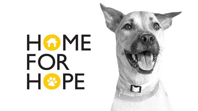 Sociale ikea lancia un programma per i cani abbandonati for Ikea programma per arredare