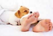 cane che dorme nel letto