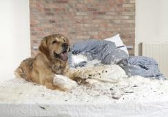 cane che fa danni in casa