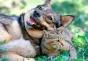cane e gatto felici