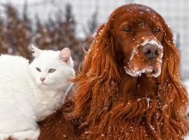 cane e gatto nella neve
